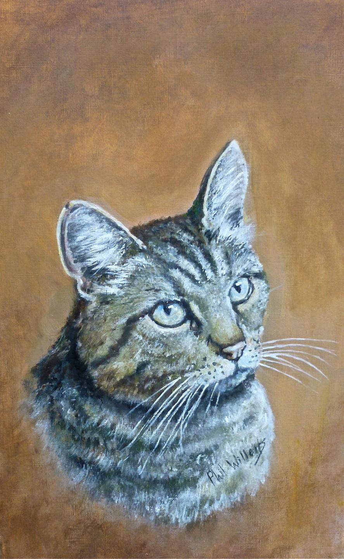 Marsha's Cat