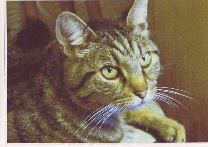 Marsha's Cat Photo